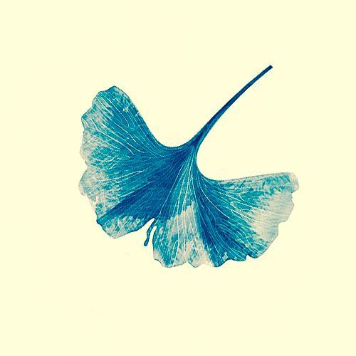 Leaf-Jinn-Ginkgo2.jpg