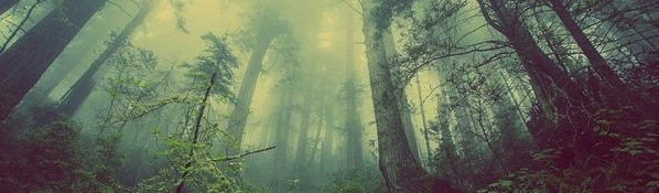 forest-931706__340%20%283%29.jpg