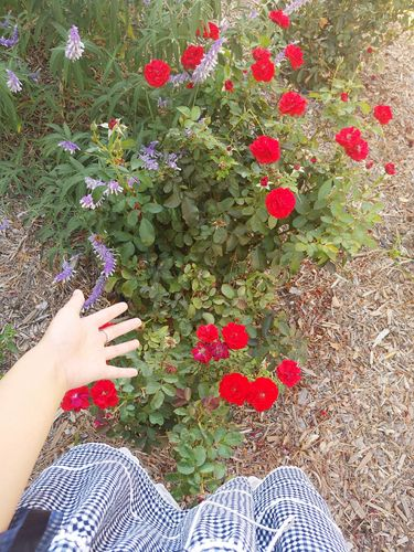 Meitheredflower