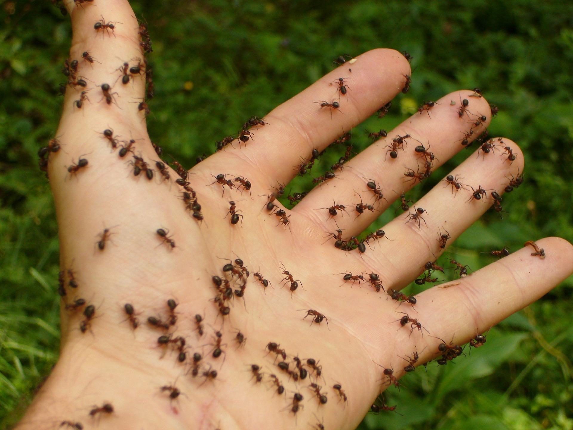 ants-4239_1920.jpg