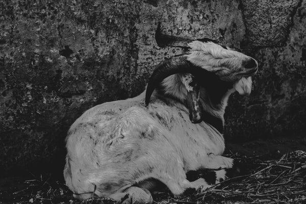 Dark-sheep.jpg