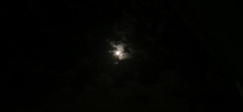 moonlightsee